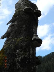 Pilzbaum